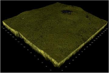 Rys. 3. Trójwymiarowa rekonstrukcja biofilmu nagromadzonego na złocie.
